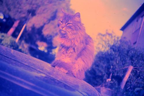 pink.cat
