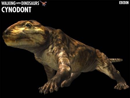 cynodont