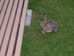 Bunny up close