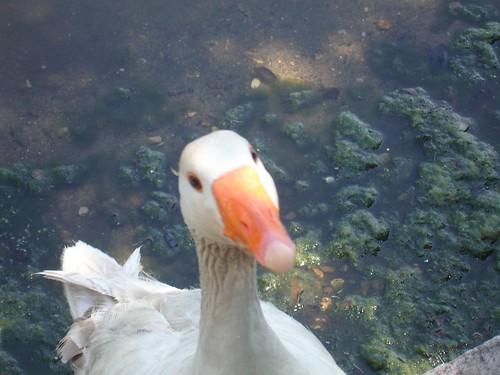 Nigel Ducky