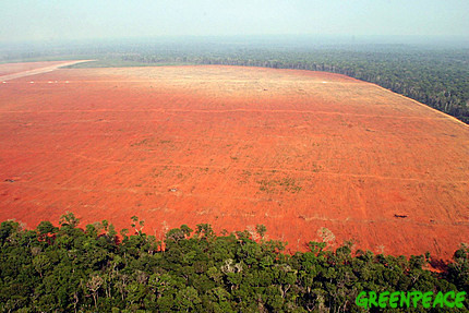 illegal-deforestation-for-soy-2