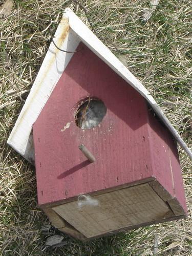 birdhousesmall