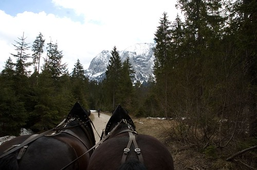 horses vs. bicycle
