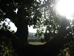נוף מהעץ
