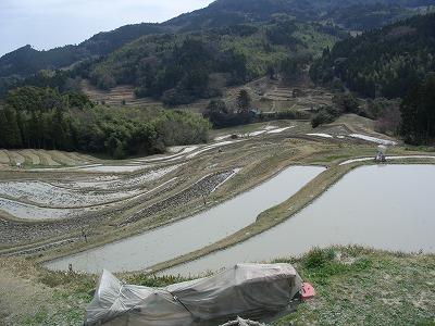 20060322 大山千枚田