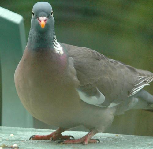 pigeonpost.jpg