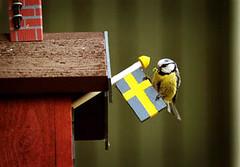Fågel med flagga