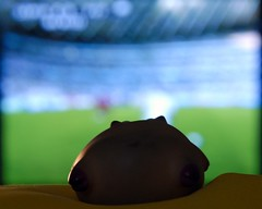 The pig watching the Soccer World Cup on TV