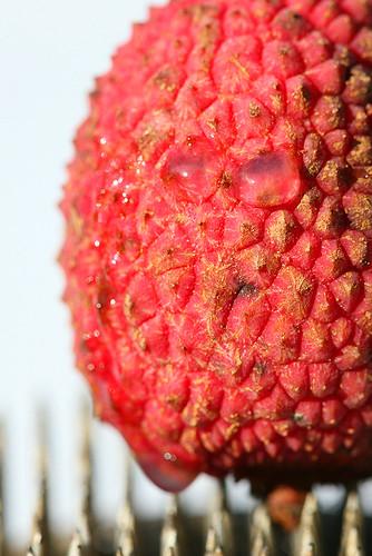 lychee-3-jpg