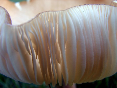 Mushroom, up close and personal....