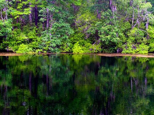 Wakulla Spring Reflections
