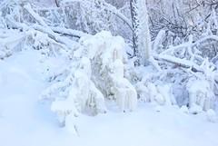 December 13, 2010 Holy SNOW!!! 072