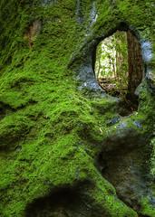 Redwood Eye photo by andertho