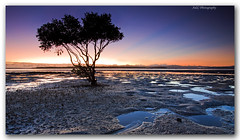 Mangrove Dawn photo by Adam Randell