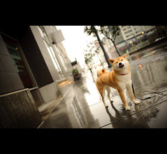 Fun in the Rain photo by kaoni701