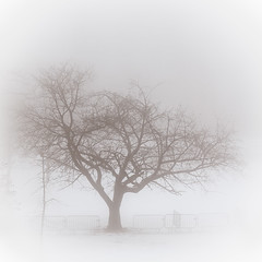 Tree in the Mist photo by Alexander Ipfelkofer