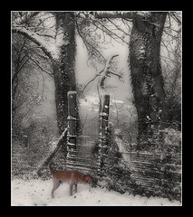 945 Lucy in the Snow photo by Nebojsa Mladjenovic