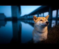 Blue Hour - 49/52 photo by kaoni701