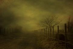 Brouillard photo by Daniel Schoumakers