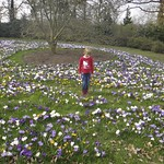 In amongst the Crocuses<br/>12 Mar 2011