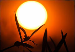 a sostegno dell'energia solare! photo by ROSSANA76 Getty Images Contributor