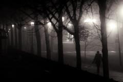 Night Walk photo by Dan Cronin^
