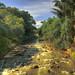 Indonesia - Java - Bogor - Kebun Raya Bogor (Bogor Botanic Garden)