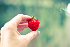 First Strawberry of the season photo by lydiafairy