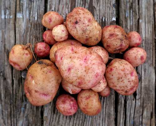 Red Potatos