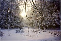 winterlight photo by Zino2009 (bob van den berg)