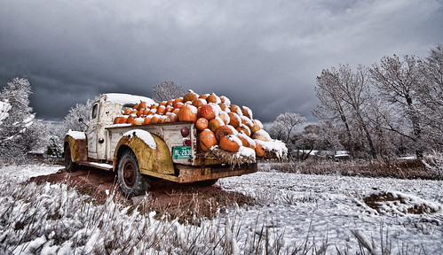 Colorado Pumpkins photo by wilsonaxpe