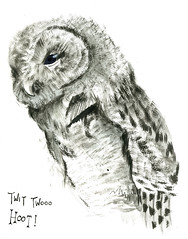 owl photo by jina11