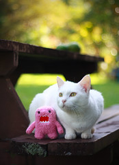 My cat and Domo photo by dar1nshark