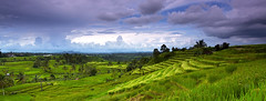 Panorama of rice terrace in Jatiluwih photo by tropicaLiving - Jessy Eykendorp