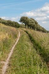 Slechts een smal pad leidt naar het doel... - Only one small path leads to the goal... photo by RuudMorijn