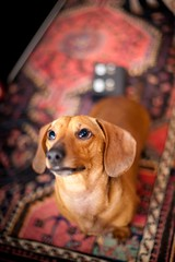 Charlie Dog photo by geraldbaranski