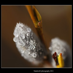 Hello my dear friends! I'm back with Spring drops! photo by Natalie-sun