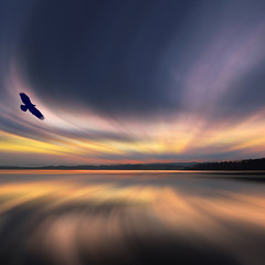 Where Eagle's Dawn by David Alexander Elder photo by David Alexander Elder