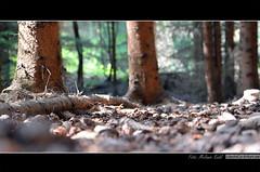 Wald photo by LitschiCo-Erfurt.de I Fotografie