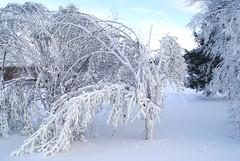 December 13, 2010 Holy SNOW!!! 085