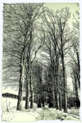 Paysage d'hiver....façon Lithographie