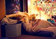 And to all a good night (157 of 365) photo by Brady the Golden Retriever