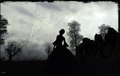 Silhouette photo by Acacia Merlin