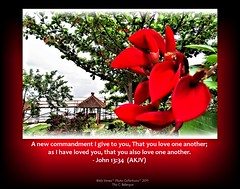 John 13:34  (AKJV) photo by [Share the Word]