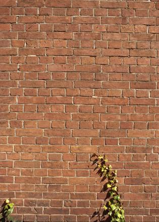 赤煉瓦文化館の塀