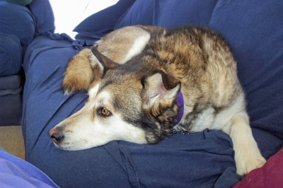 Kishka on couch