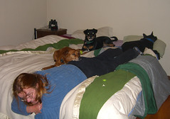 The dogs and me on Monday night