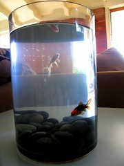 fish corner2