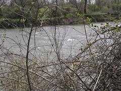 Rapids in American River