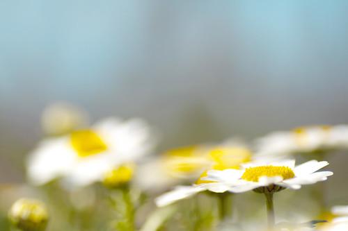 風車村の春